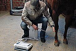 Tierarzt für Pferde - die mobile Pferde-Praxis gynaekologie